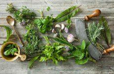 Tìm hiểu cây thuốc nam chữa bệnh gai cột sống